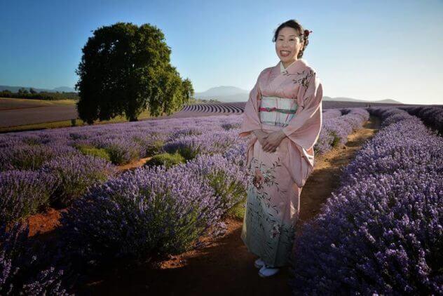 Japanese Harp amongst the Lavender