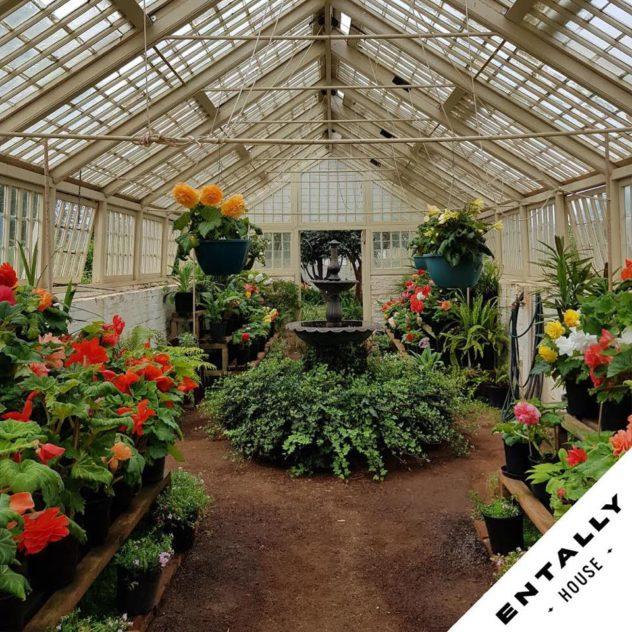 Begonia Day - Entally House